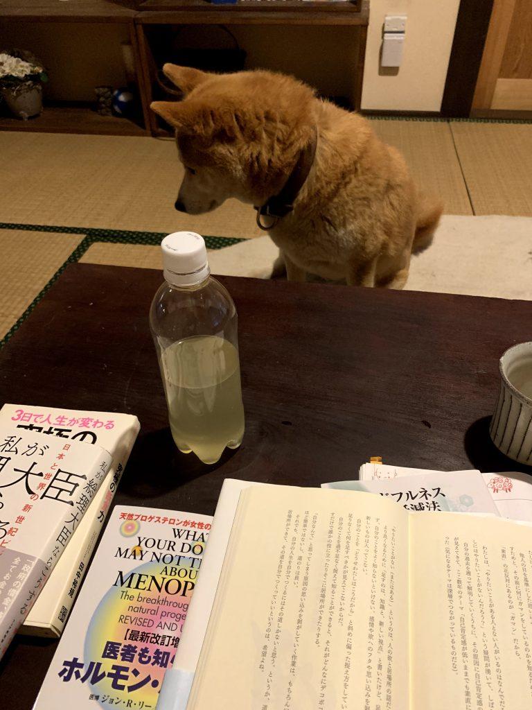 読書の傍らには犬。